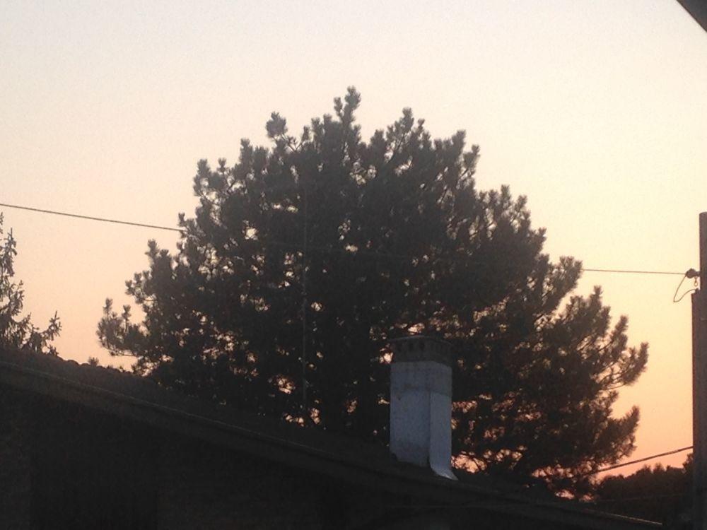 Imbrunire a San Vito con tanti uccellini e uccello che fa .... iiiiiiiiiiiiiii ! .. e campane delle 19