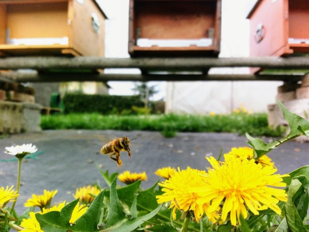 Suono delle api