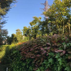 Giardino in città