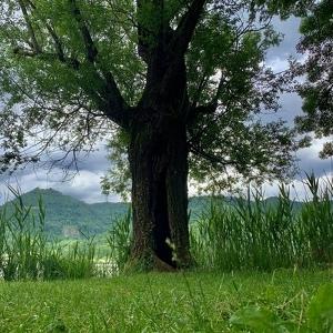 Passeggiata al lago di fimon