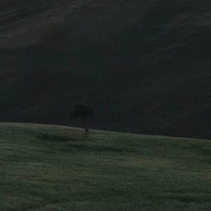 L'Albero di Pero